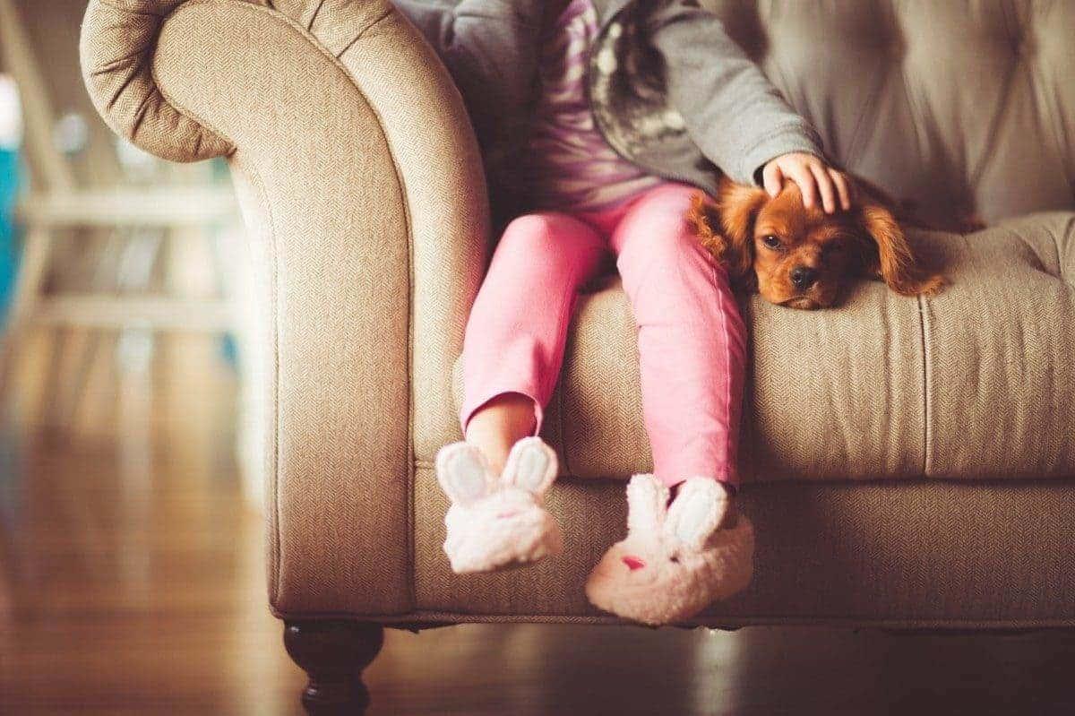 動物と人間という垣根を越えたより良い幸せな暮らしをサポート