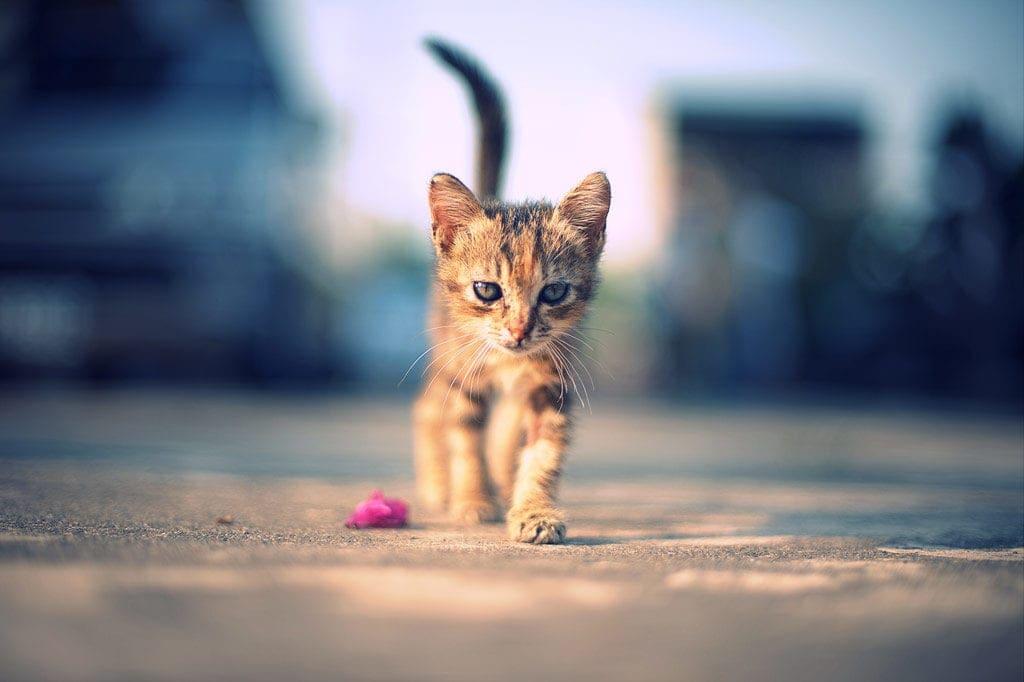 不安と恐怖でいっぱい動物たちの言葉を、聞き取れる環境づくりを。